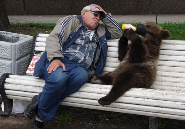 Bears Often Walk the Streets in Russia