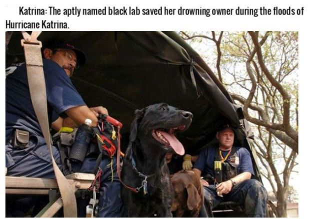 Heroic Dogs That Are Truly Man's Best Friend
