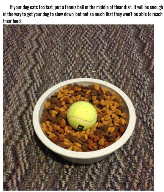 Smart Tricks for Dog Owners