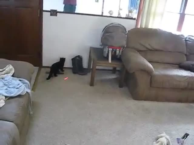 Laser Pointer Amuses Both Toddler and Cat Simultaneously  (VIDEO)