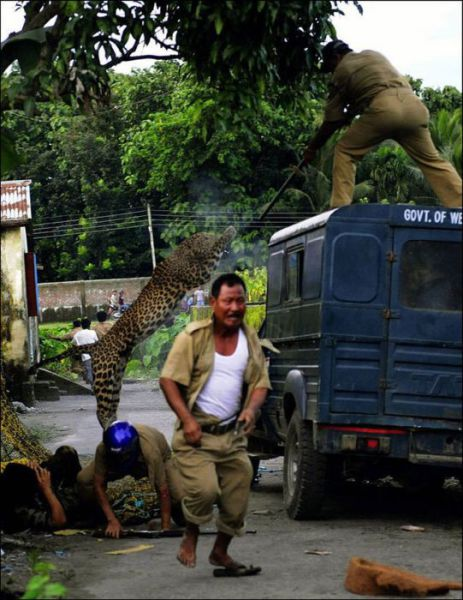A Wild Leopard Attacks Innocent Bystanders in India