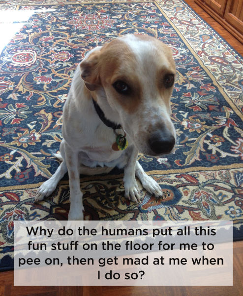 What Your Dog Secretly Thinks about Life