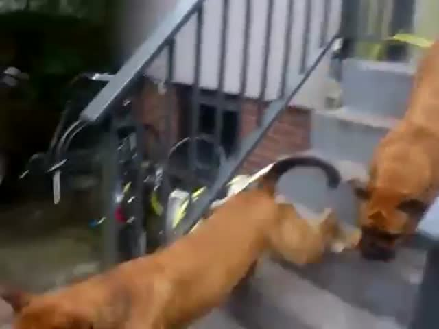 Smart Dogs Team-up To Get a Tyre out of a Swimming Pool
