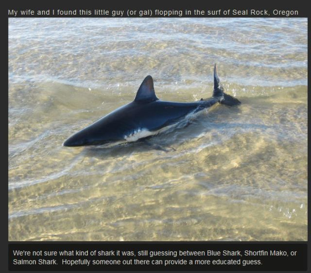 How to Toss a Shark Back into the Ocean Like a Boss
