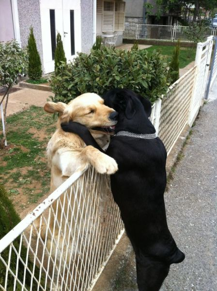 Cute Dog Pics That You Will Love