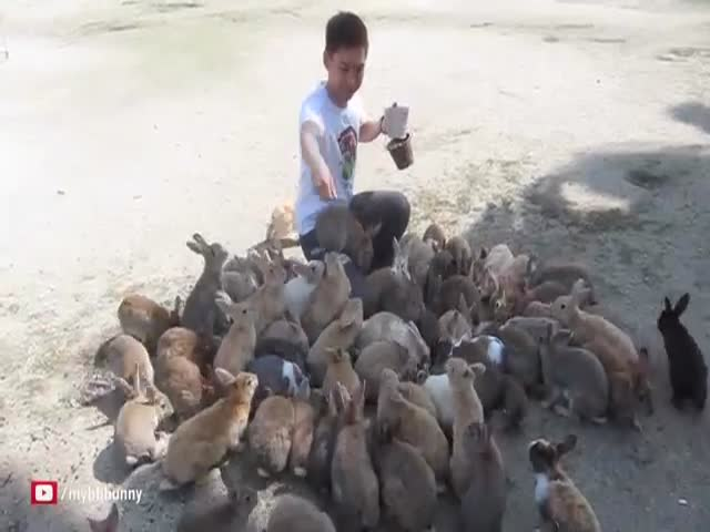 Bunnies Attack Dude in Japan!