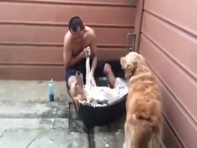 The Most Relaxed Dog Ever  (VIDEO)