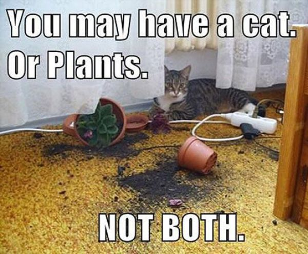 Cat Lovers Will Totally Get This!