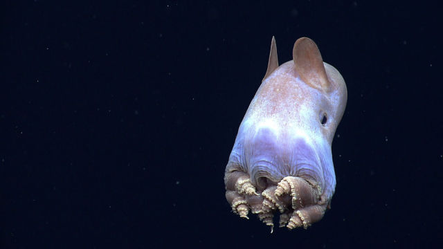 Some of the Many Unusual and Bizarre Creatures of the Sea