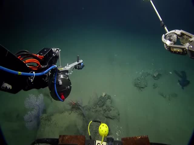 Amazing Footage of a Rare Deep Sea Creature: the Siphonophorae  (VIDEO)
