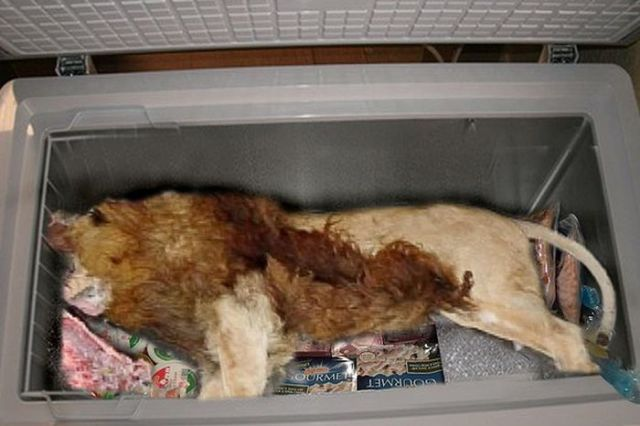 A Gross and Shocking Discovery inside Restaurant's Freezer