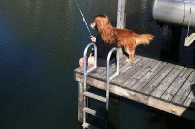 Dogs Who Have Impeccable Timing