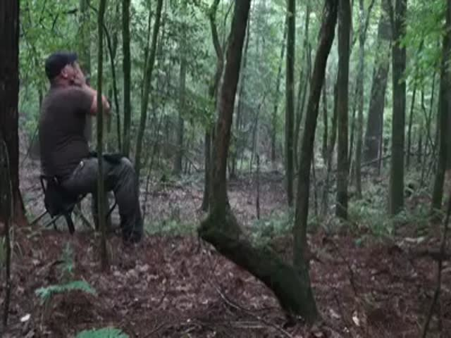 Hunter Imitates Coyote Howl in the Woods and Gets a Terrifying Response  (VIDEO)
