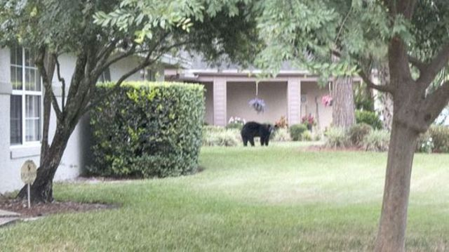 This Bear Found a Comfy Spot to Relax and Unwind in the Suburbs