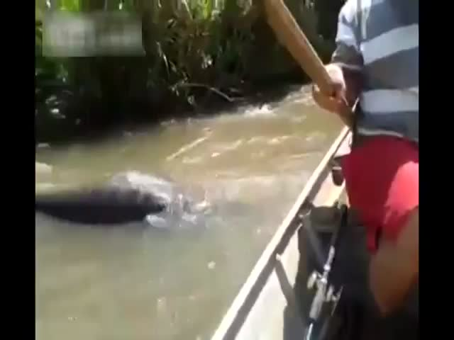 Idiots in a Boat vs Anaconda  (VIDEO)