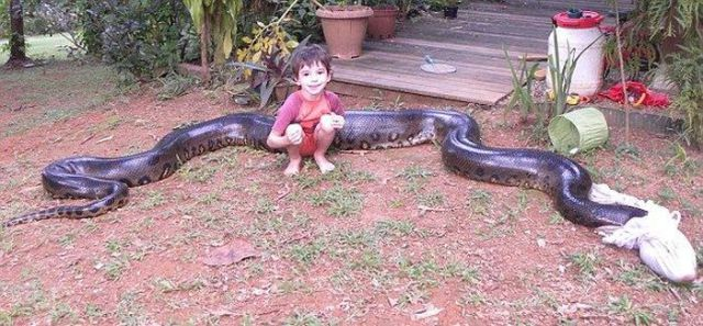 Guy Catches a Massive Anaconda Snake While Fishing