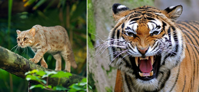 The Staggering Size Differences between Animals of the Same Families