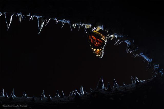 Stunning Entries to the 2014 Wildlife Photographer of the Year Contest