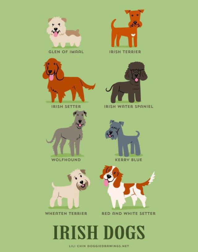 A Guide to Which Nationality Your Dog Really Comes from