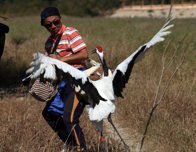 An Unusual Fight between a Crane and a Photographer
