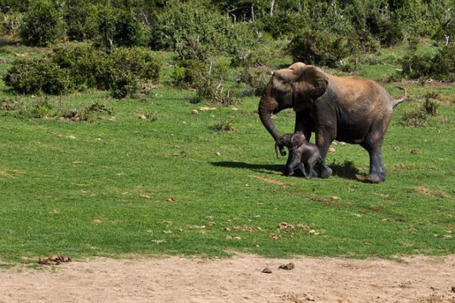 Park Rangers Stage a Daring Rescue of Baby Elephant