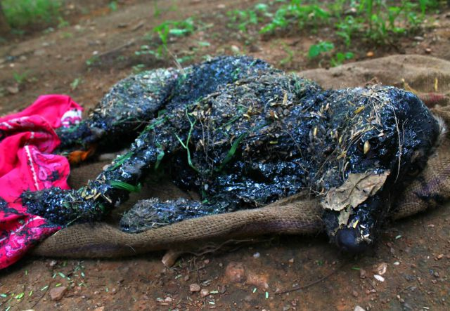 Puppy Gets Rescued After Falling into Tar Pit