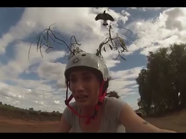 Woman Tries Different Things to Keep Swooping Magpies Away