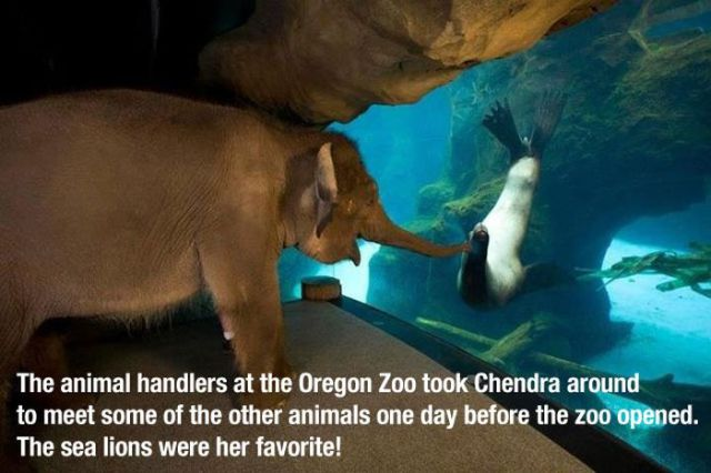 Photos That Will Make You Feel Warm and Fuzzy Inside