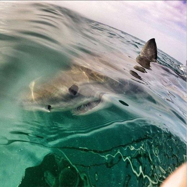 Frightening Close Up Photos of a Great White Shark