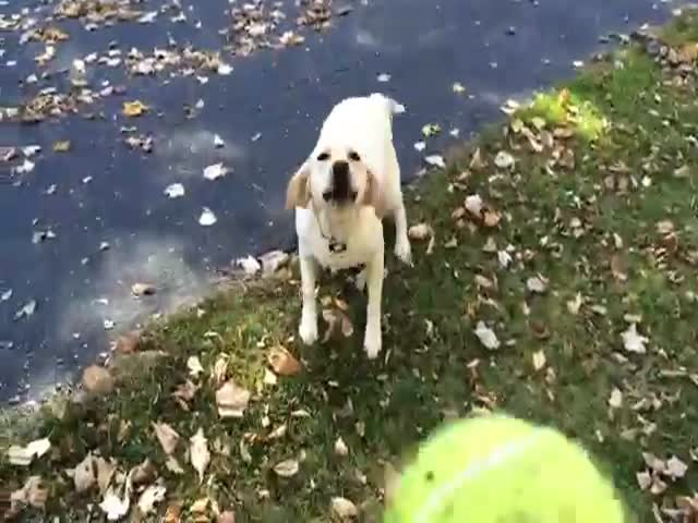 Dog's Favorite Game Is Fetch in the Leaf Pile