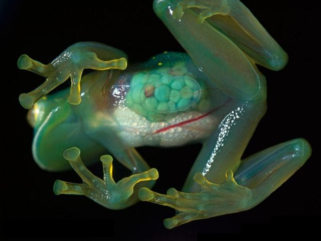 Science Meets Nature in These Bizarre Mutations