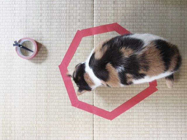 The Magnetic Effect of a Marked Area on a Cat