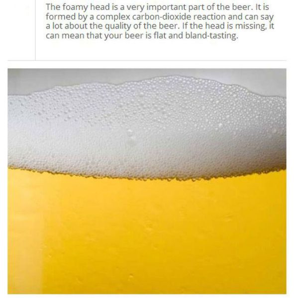 Trivia to Up Your Knowledge about Beer