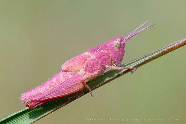 Unusual Insects and Animals That Are Naturally Colorful