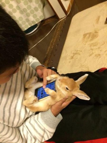 Japanese People Have Found a New Use for Bunny Rabbits