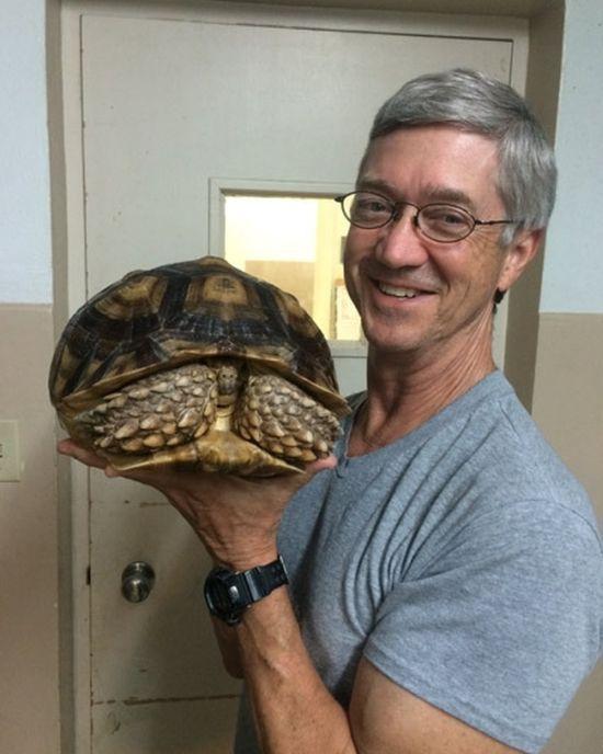 A Turtle inside a Tortoise