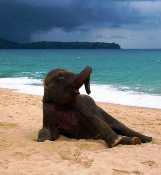 This Baby Elephant's Day at the Beach Will Bring a Smile to Your Face