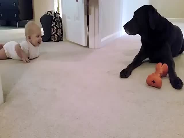 Baby's First Crawl Caught on Camera with Cute Ending