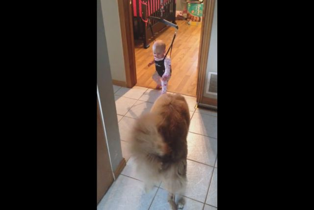 Dog Tries to Teach Baby How to Jump in Her Bouncy Chair