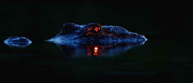 Swamp Animals Are Even More Frightening at Night