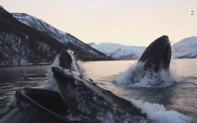 Two Men on a Boat Get Surrounded by 6 Huge Humpback Whales
