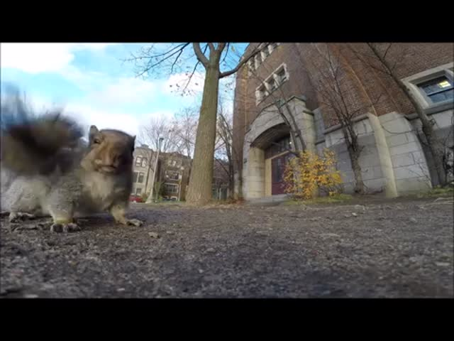 Squirrel Steals Guy's GoPro Camera