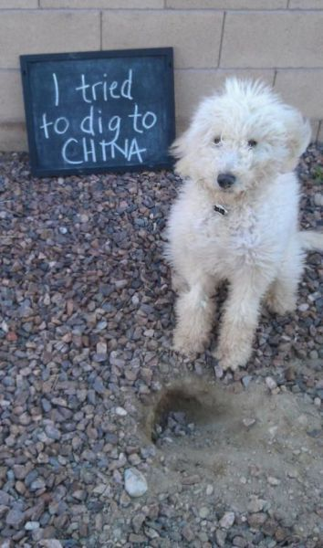 Dogs Getting Publicly Shamed by Their Owners