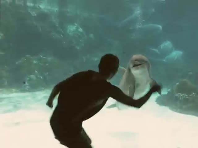 Dolphins Being Entertained by Girl Doing Gymnastics