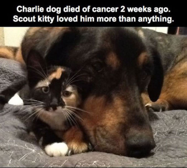 A Sad Story of a Cat Who Lost Her Best Friend