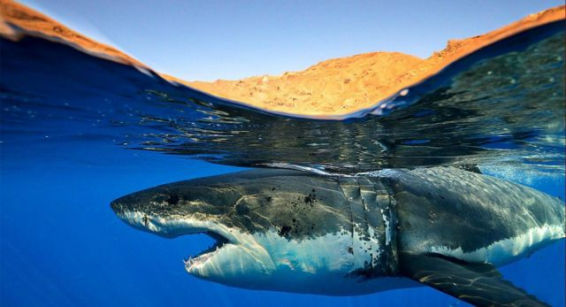 Stunning Photography Captures Life Above and Below the Water