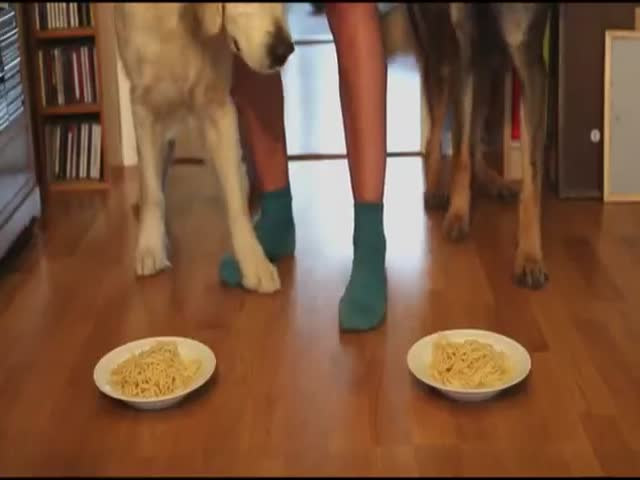 Spaghetti Eating Contest: Golden Retriever vs German Shepherd