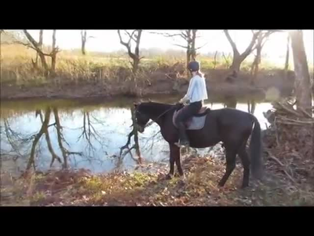 Horse Afraid of Water Gets Over His Fear by Giving It a Try