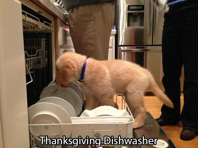 A Little Thanksgiving Humor to Brighten Your Day