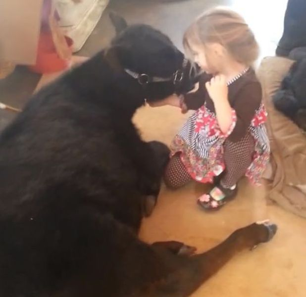 A Cute 5 Year Old Brings Home an Unexpected Guest